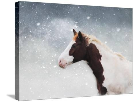 Paint Horse in the Snow-Jai Johnson-Stretched Canvas Print