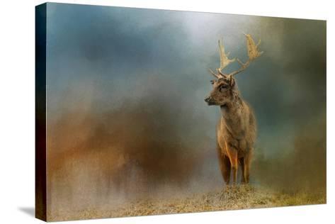 Painterly Fallow Buck-Jai Johnson-Stretched Canvas Print