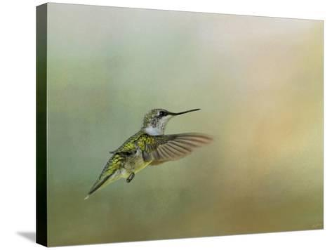 Peaceful Day with a Hummingbird-Jai Johnson-Stretched Canvas Print