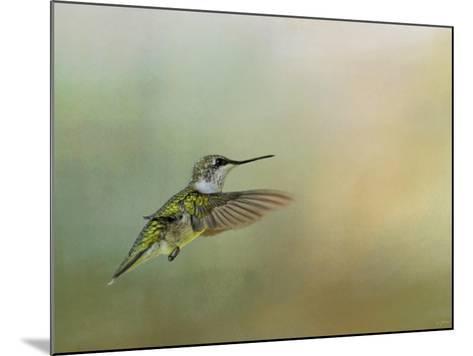 Peaceful Day with a Hummingbird-Jai Johnson-Mounted Giclee Print