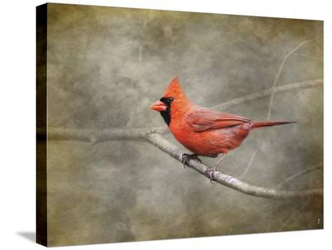 His Red Glory Cardinal-Jai Johnson-Stretched Canvas Print