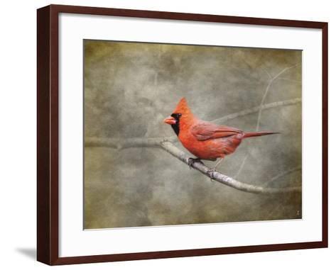 His Red Glory Cardinal-Jai Johnson-Framed Art Print