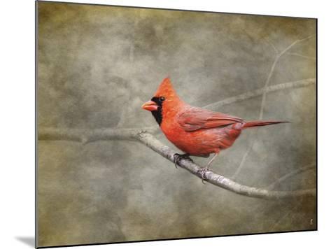 His Red Glory Cardinal-Jai Johnson-Mounted Giclee Print