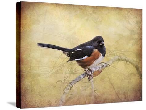 Eastern Towhee Portrait-Jai Johnson-Stretched Canvas Print