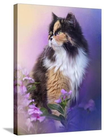 Calico Kitty in the Garden-Jai Johnson-Stretched Canvas Print