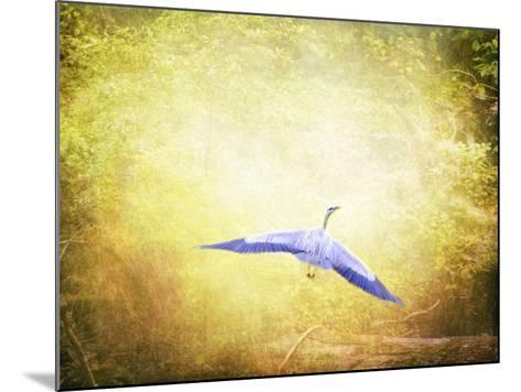 Blue Heron in the Light-Jai Johnson-Mounted Giclee Print