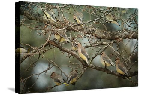 Family Reunion Cedar Wax Wings-Jai Johnson-Stretched Canvas Print