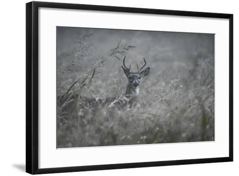 Foggy Morning Buck-Jai Johnson-Framed Art Print