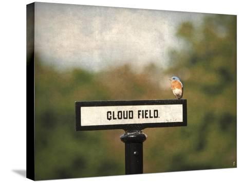 Bluebird at Cloud Field-Jai Johnson-Stretched Canvas Print