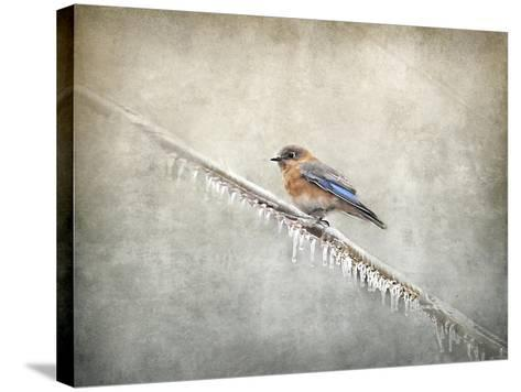 Bluebird Braving the Cold-Jai Johnson-Stretched Canvas Print
