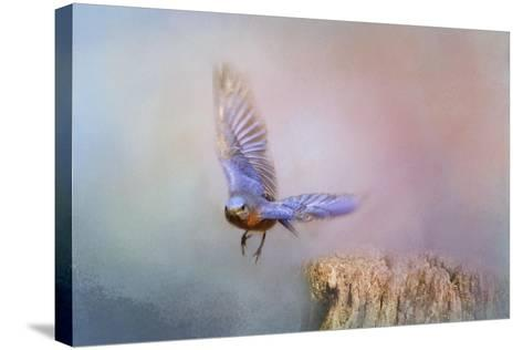 Bluebird Escape-Jai Johnson-Stretched Canvas Print