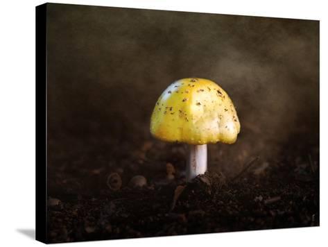 Little Yellow Mushroom-Jai Johnson-Stretched Canvas Print