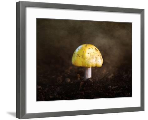 Little Yellow Mushroom-Jai Johnson-Framed Art Print