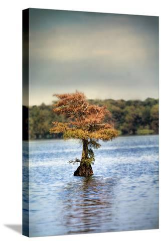 Lonely Little Cypress Tree-Jai Johnson-Stretched Canvas Print