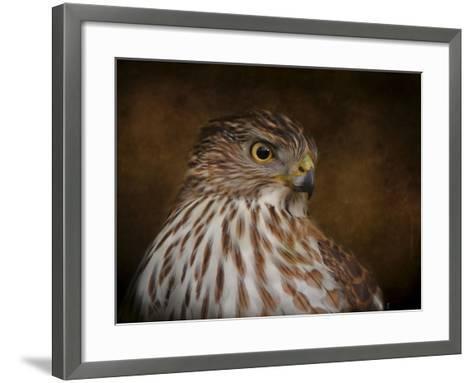 Coopers Hawk Portrait 2-Jai Johnson-Framed Art Print