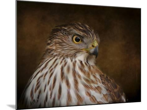 Coopers Hawk Portrait 2-Jai Johnson-Mounted Giclee Print