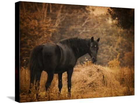 Horse and the Haystack-Jai Johnson-Stretched Canvas Print