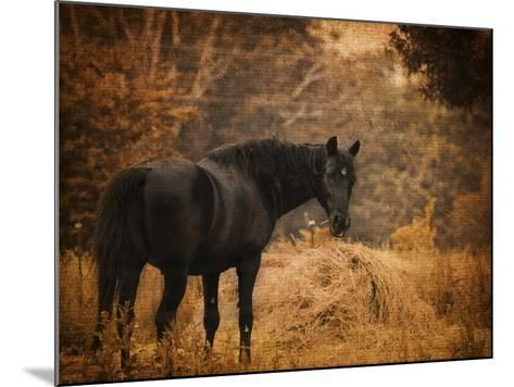Horse and the Haystack-Jai Johnson-Mounted Giclee Print