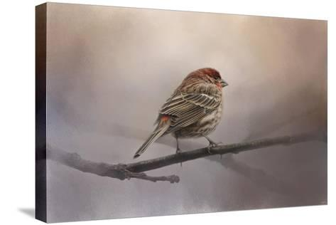 House Finch in January-Jai Johnson-Stretched Canvas Print