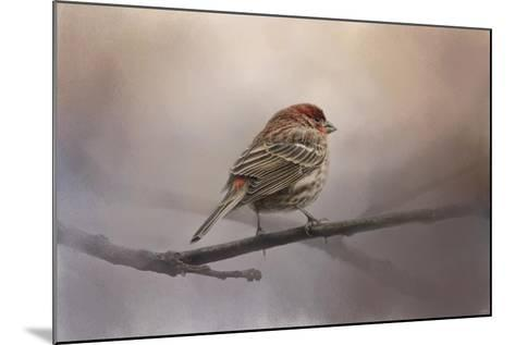 House Finch in January-Jai Johnson-Mounted Giclee Print