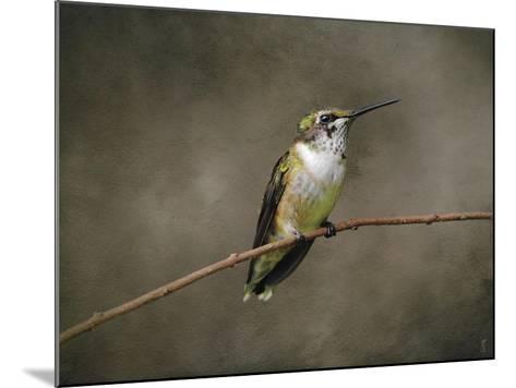 Hummingbird Portrait-Jai Johnson-Mounted Giclee Print