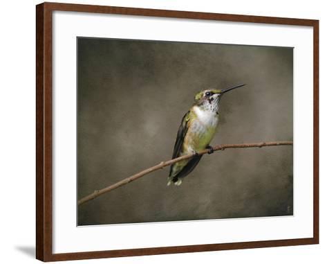 Hummingbird Portrait-Jai Johnson-Framed Art Print