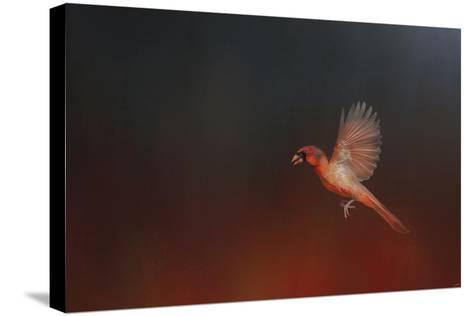 I Wish I Could Fly - Cardinal 1-Jai Johnson-Stretched Canvas Print