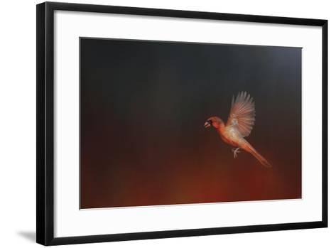 I Wish I Could Fly - Cardinal 1-Jai Johnson-Framed Art Print