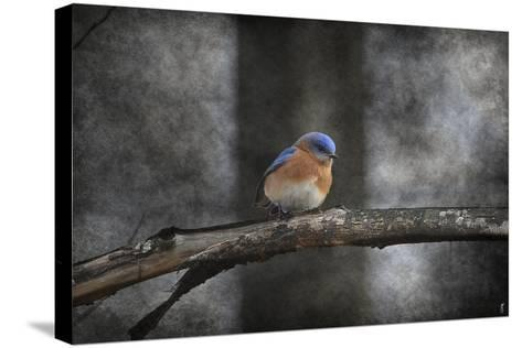 Last Day Home Bluebird-Jai Johnson-Stretched Canvas Print