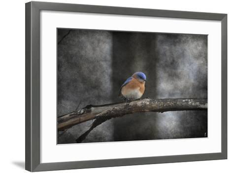 Last Day Home Bluebird-Jai Johnson-Framed Art Print