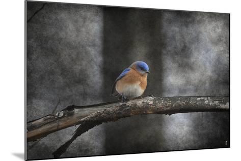 Last Day Home Bluebird-Jai Johnson-Mounted Giclee Print