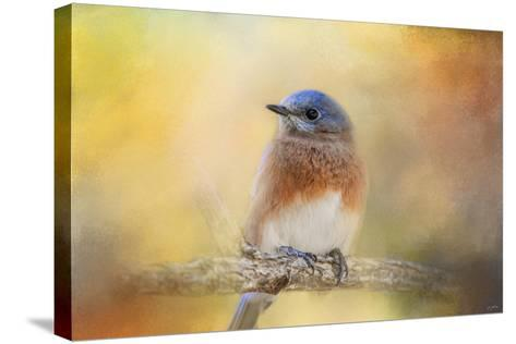 Autumn's Treasure-Jai Johnson-Stretched Canvas Print