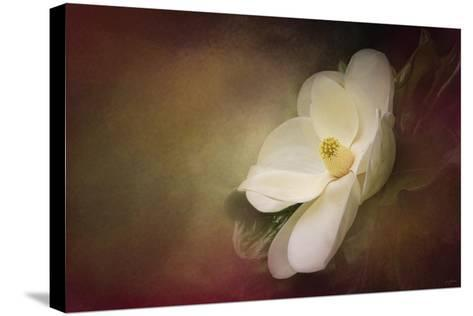 Magnolia in Bloom 1-Jai Johnson-Stretched Canvas Print