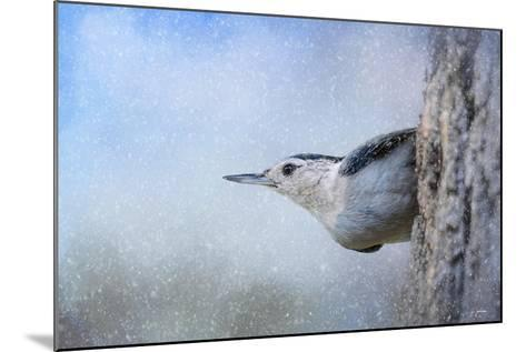 Nuthatch in the Snow-Jai Johnson-Mounted Giclee Print