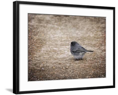 Tiny Junco in a Big World-Jai Johnson-Framed Art Print