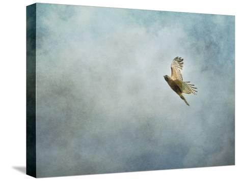 Up Up and Away Red Shouldered Hawk-Jai Johnson-Stretched Canvas Print