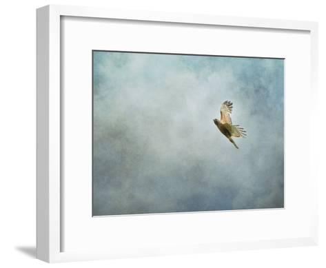 Up Up and Away Red Shouldered Hawk-Jai Johnson-Framed Art Print