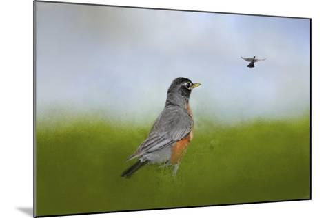 Robin in the Field-Jai Johnson-Mounted Giclee Print