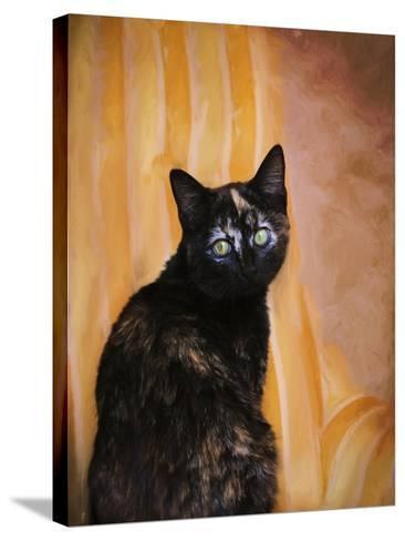 Royal Kitten-Jai Johnson-Stretched Canvas Print