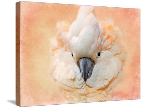 Salmon Crested Cockatoo Portrait 2-Jai Johnson-Stretched Canvas Print