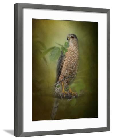 Sharp Shinned Hawk-Jai Johnson-Framed Art Print