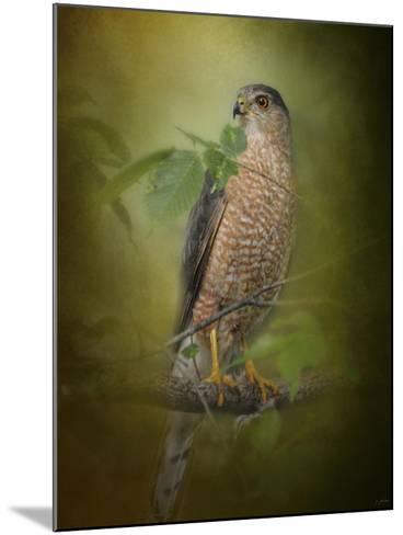 Sharp Shinned Hawk-Jai Johnson-Mounted Giclee Print