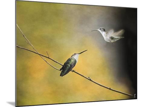 Whisper of Your Wings Hummingbirds-Jai Johnson-Mounted Giclee Print