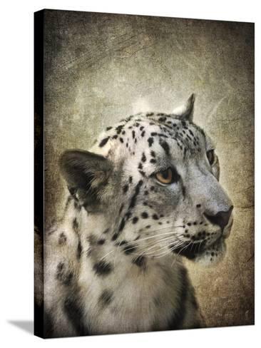 Snow Leopard Portrait-Jai Johnson-Stretched Canvas Print