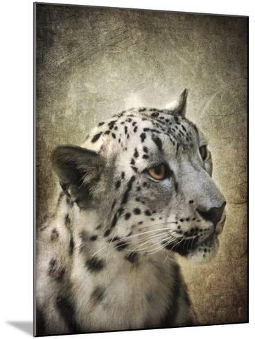 Snow Leopard Portrait-Jai Johnson-Mounted Giclee Print