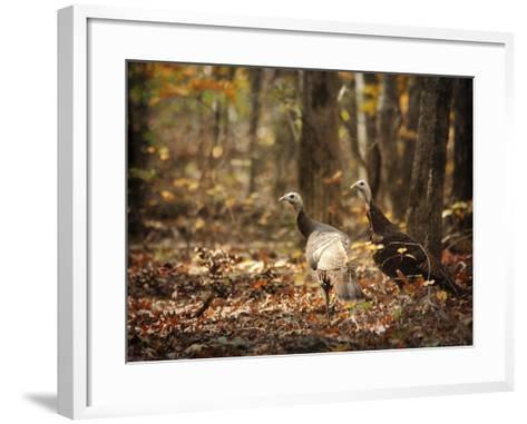 Wild Turkey in the Woods-Jai Johnson-Framed Art Print