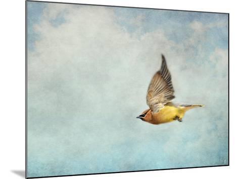 Winter Flight Cedar Waxwing-Jai Johnson-Mounted Giclee Print