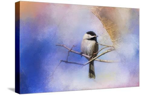 Winter Morning Chickadee-Jai Johnson-Stretched Canvas Print