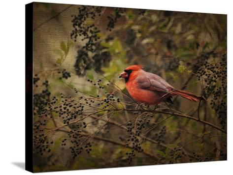 Song of the Red Bird 2-Jai Johnson-Stretched Canvas Print