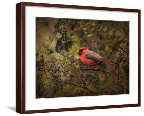 Song of the Red Bird 2-Jai Johnson-Framed Art Print